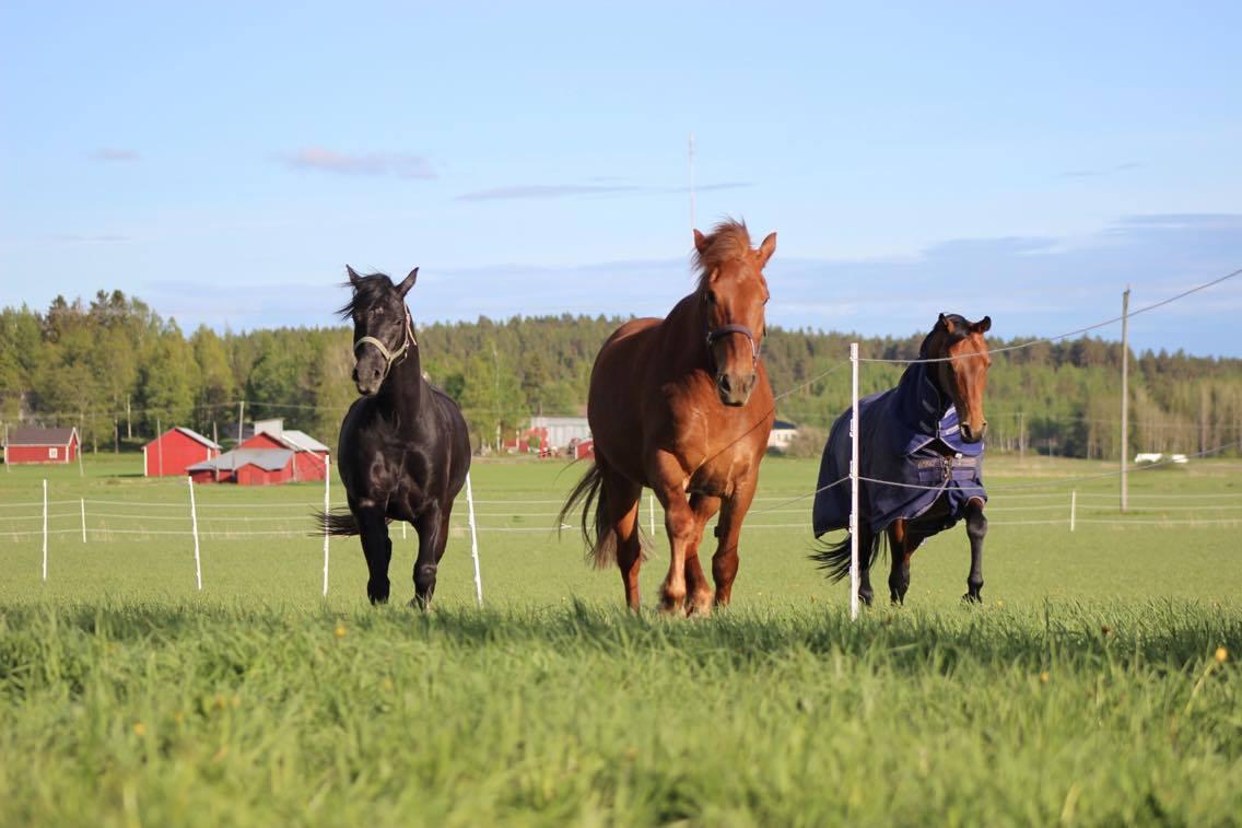 Course Image  Eläinlajikohtainen tuottaminen, hoitaminen ja hyvinvointi