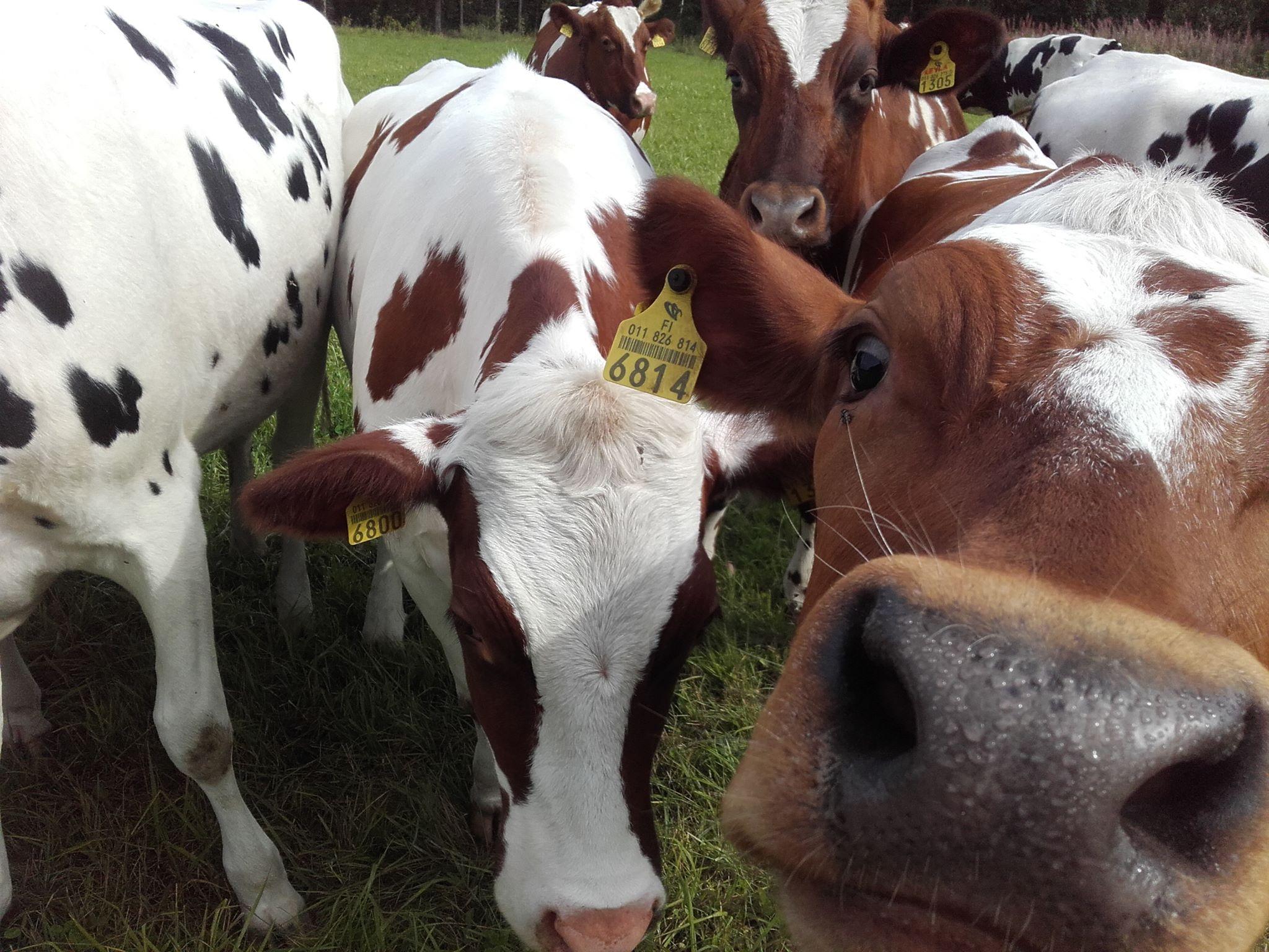 Course Image Tuotantoeläinten hoitaminen ja hyvinvoinnista huolehtiminen 2020
